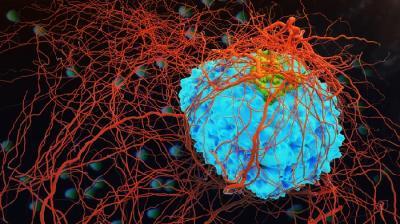Jenis Kanker yang Dipicu dari Paparan Radiasi
