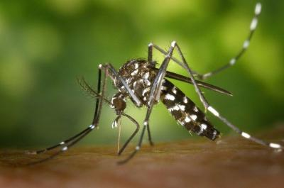 Basmi Nyamuk Menggunakan Pestisida Tidak Efektif, Ini Alasannya