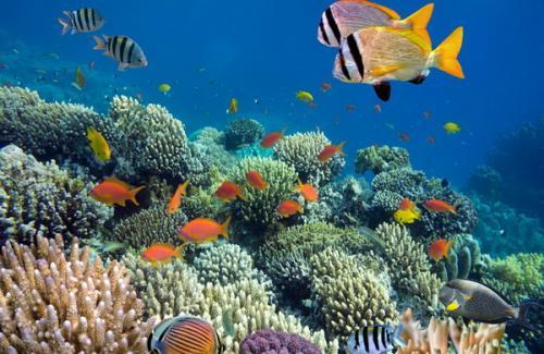 Taman bawah laut Bunaken