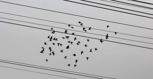 Tidak ada aliran listrik melewati tubuh burung ataupun tupai sehingga tidak akan tersetrum.