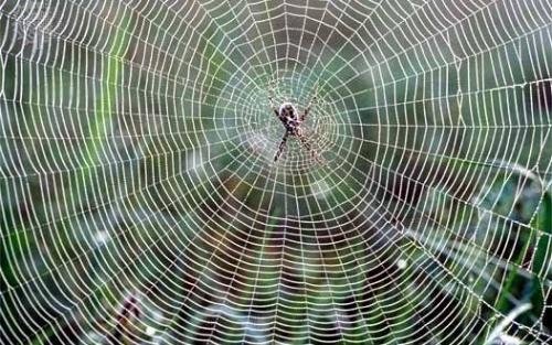 Jaring laba-laba. (Foto: Istimewa)