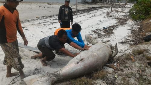 Dugong ditemukan mati di Riau. Banda H