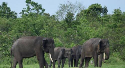 Ilustrasi gajah