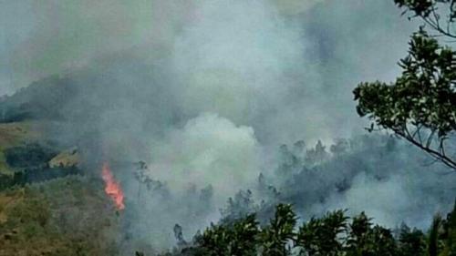 Kebakaran di Gunung Arjuno. (Foto: Ist)