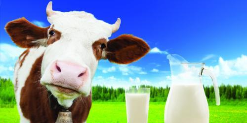 Ilustrasi susu sapi