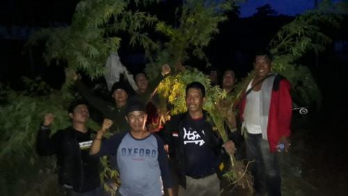 Tim gabungan TNI ungkap 1 hektare ladang ganja di Empat Lawang, Sumsel (Ist)