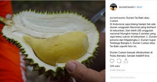 Durian Tai Babi