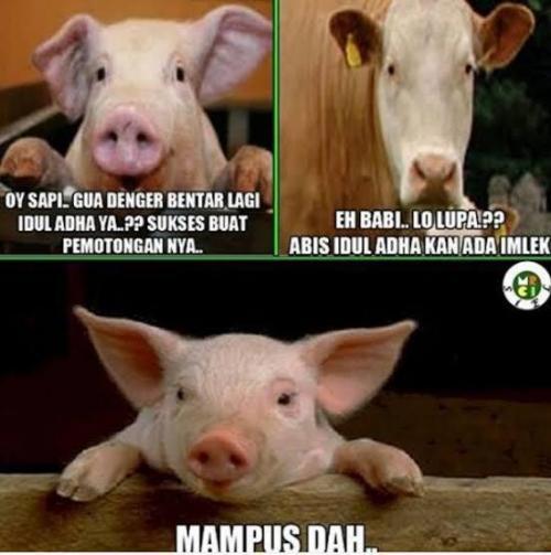 500 Gambar Babi Untuk Imlek