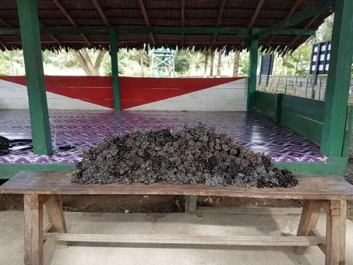 Satgas Yonif 328/Dgh Amankan 21 Kg Vanili Selundupan di Perbatasan Papua (Dispenad)