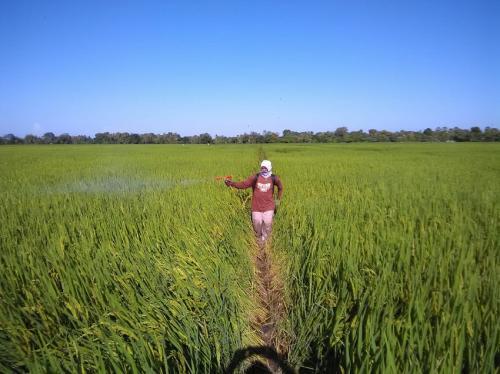 Arti Swasembada Dan Capaian Sektor Pertanian Okezone Economy