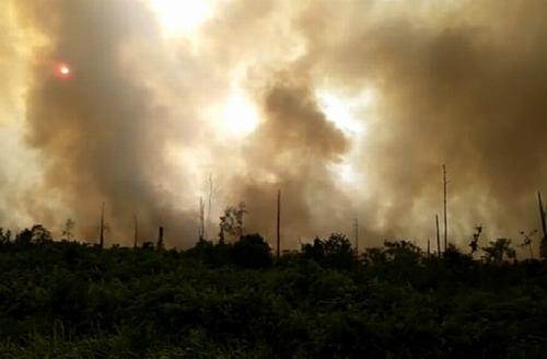 Kebakaran hutan Riau (Dok Okezone/Banda Haruddin Tanjung)