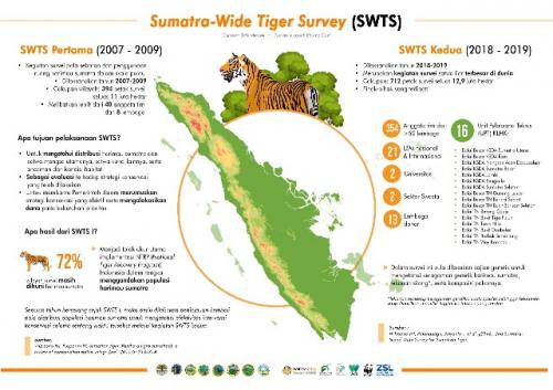 Survei harimau sumatera. (Foto: KLHK)