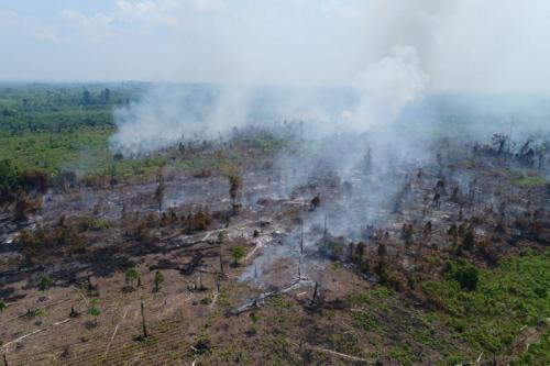Kebakaran Hutan Jambi. (Foto : Ilustrasi)
