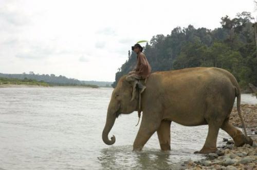 Ilustrasi gajah. (Foto: Ist)
