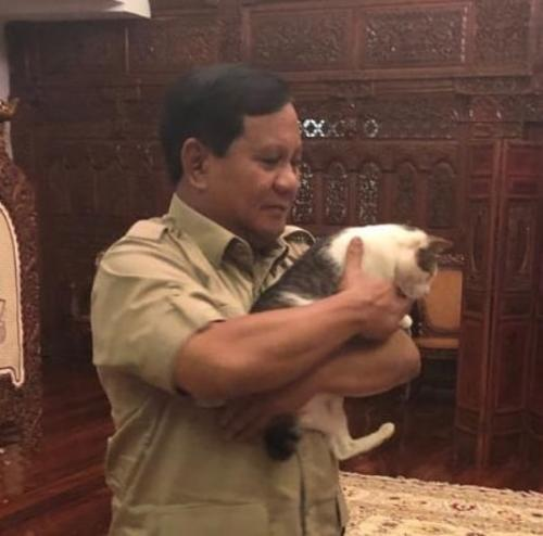 4 Fakta Tentang Bobby Kucing Kesayangan Prabowo Yang Punya 63 Ribu Followers Okezone Lifestyle