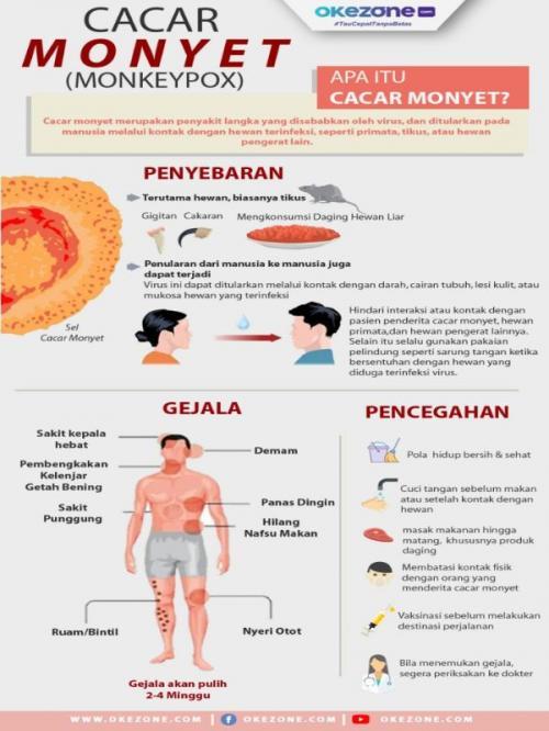 Infografis cacar monyet
