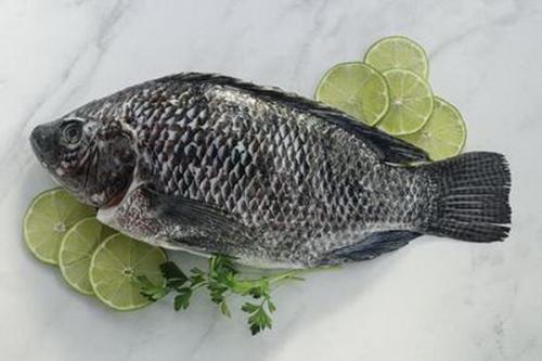 Ikan Tilapia Nikmat Disajikan bakar maupun goreng
