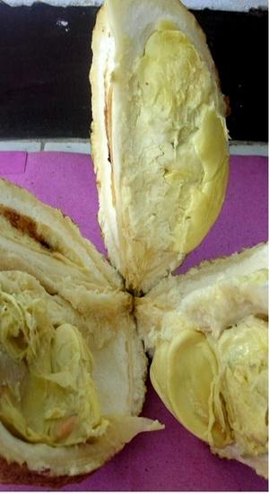Durian dari lereng Gunung Rinjani.