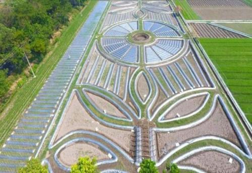 Wisata Crop Circle Kediri buatan petani tak hanya mengandalkan keindahan alam.