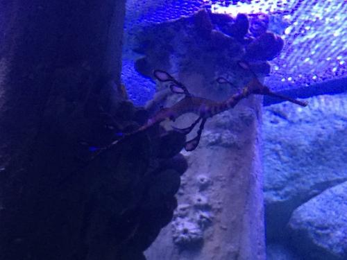 Spesies laut