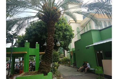 Pohon Kurma di Bekasi