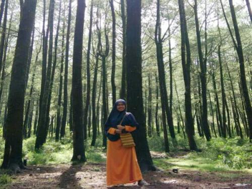 Hutan pinus spot camping favorit
