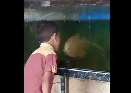 viral bocah adu ikan (twitter)