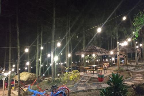 Suasana Malam di Taman Hutan Pinus