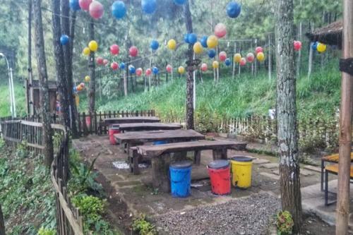 Deretan kursi kayu dan suasana alam di Kafe Taman Hutan Pinus