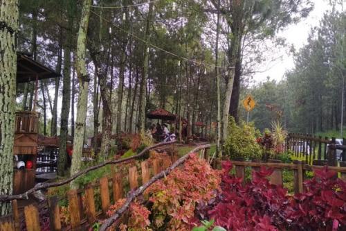 Suasana Asri di Taman Hutan Pinus Kota Batu
