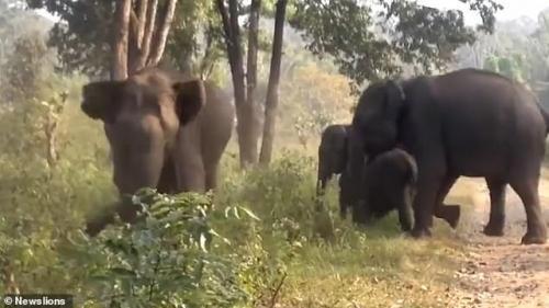 Gajah Liar