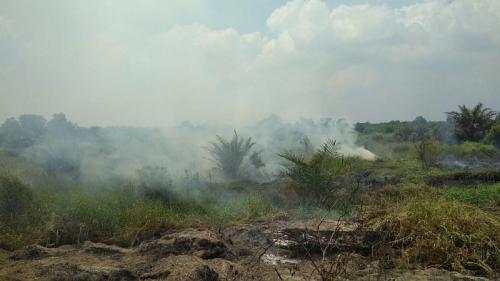 Kebakaran hutan di Riau. (Ist)