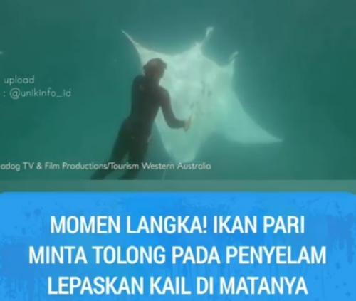 Ikan Pari Mantan minta tolong