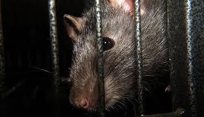 5 Fobia Terhadap Hewan yang Sering Terjadi