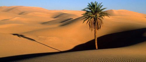 Ummu Salamah kehilangan suami di Perang Uhud