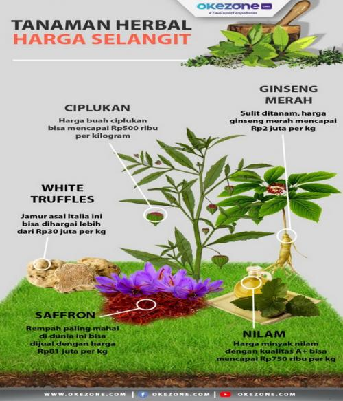 tanaman herbal