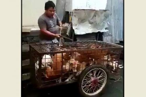 Tangkapan layar video penyiksaan anjing yang viral di medsos. (Istimewa)