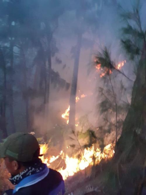 Ilustrasi kebakaran hutan. (Foto: Ist)
