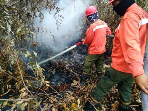 Petugas memadamkan kebakaran yang terjadi di hutan daerah Kampar, Riau. (Ist)