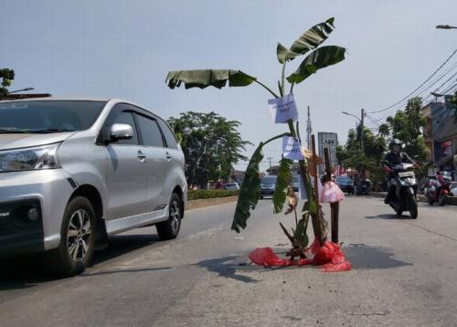 Lubang di Jalan Siliwangi, Pamulang, Tangerang Selatan (Tangsel) Ditanami Pohon Kelapa (foto: Hambali/Okezone)