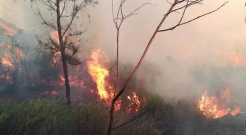 Hutan Gunung Welirang Terbakar Pendakian Ditutup (foto: Ist)