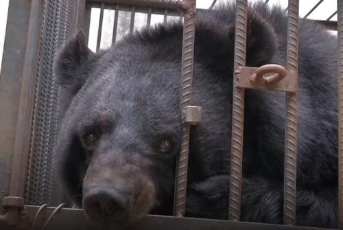 Pelihara Beruang