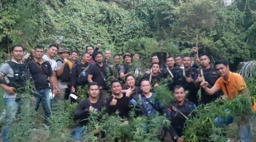 Tim Gabungan Temukan Ladang Ganja 2,5 Hektar di Musi Rawas Utara, Sumsel (foto: Era Neizma/iNews)