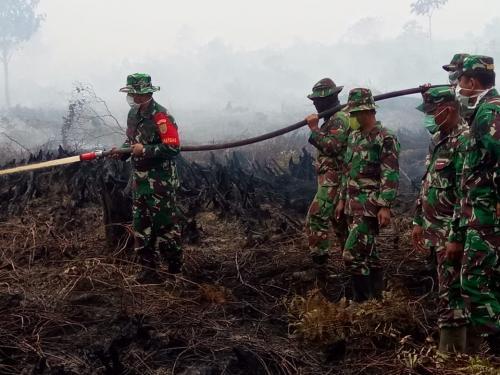 TNI padamkan kebakaran hutan di Jambi (istimewa)