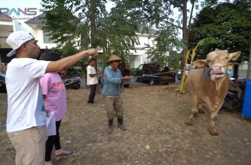 Raffi Ahmad mengurbankan 6 ekor sapi dan 11 kambing pada perayaan Idul Adha 2019. (Foto: YouTube)