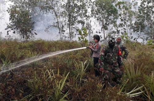 Kebakaran hutan dan lahan (karhutla) di Kalimantan. (Ist)