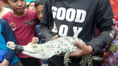 Buaya di Bogor
