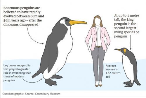 Penguin raksasa