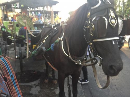Kuda Andong