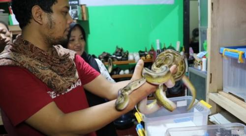 Pria memegang ular